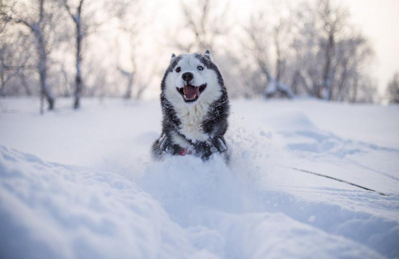 «Хороший мальчик»: как собаки распознают похвалу и почему это важно для науки