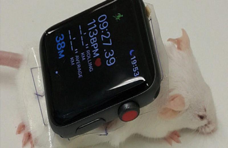 Умные часы и оптогенетика нормализовали показатели глюкозы у мышей с диабетом