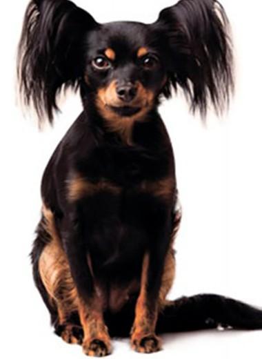 Милый друг: 17 лучших пород собак для жизни в городе