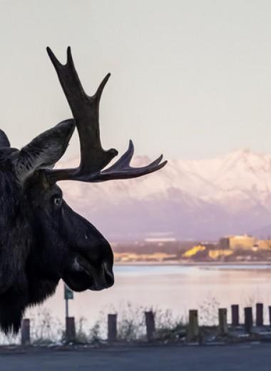 В аду нужны хорошие стрелки (гонзо-репортаж из Аляски)
