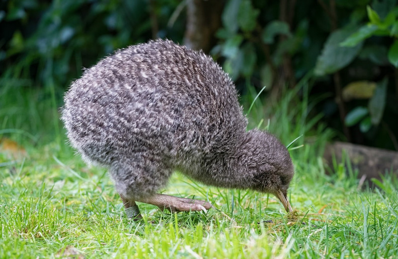 Птицы научились зондировать субстрат клювом еще в эпоху динозавров