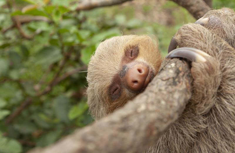 10 быстрых фактов о ленивцах