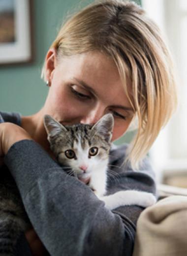 Кошки против собак: выбор домашнего питомца разрушил отношения пары
