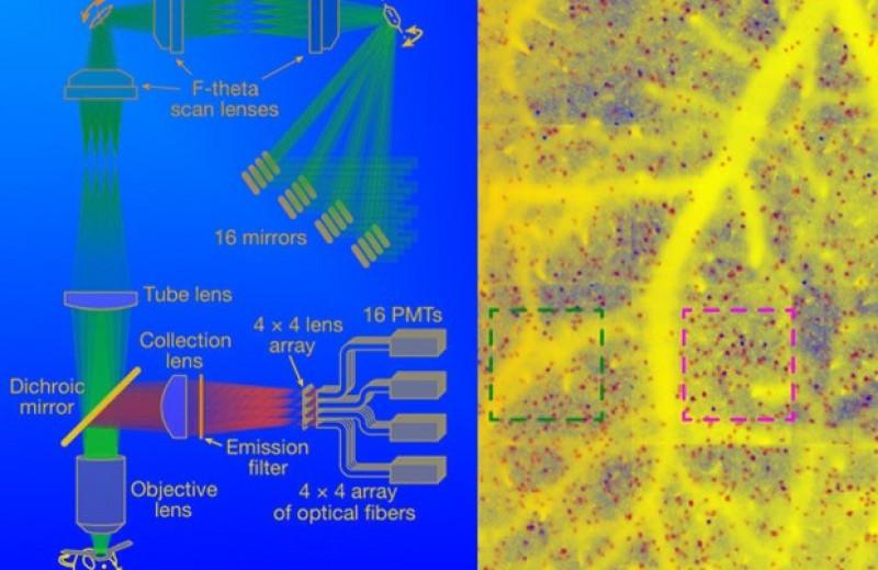 Помехи помешали нейронам кодировать информацию