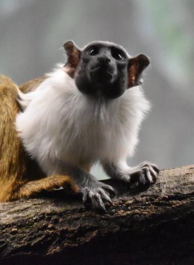 Приматы подражают друг другу, чтобы избежать конфликта