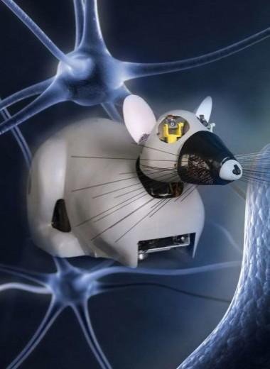 Будущее рядом: роботы из биологических тканей