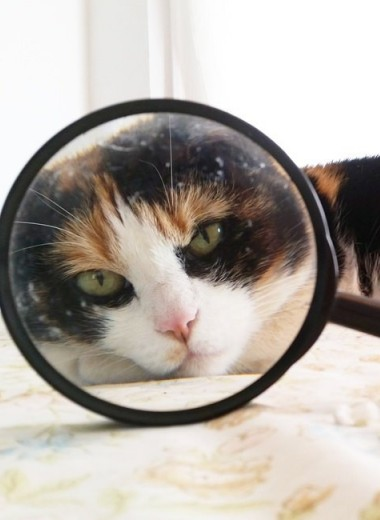 20 фактов о кошках, которые вы могли не знать