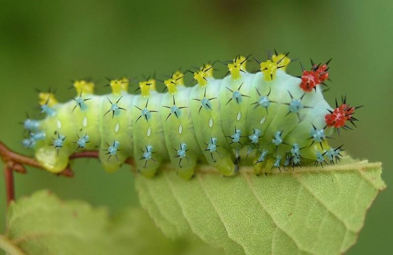 Было – стало: как выглядят бабочки и их гусеницы