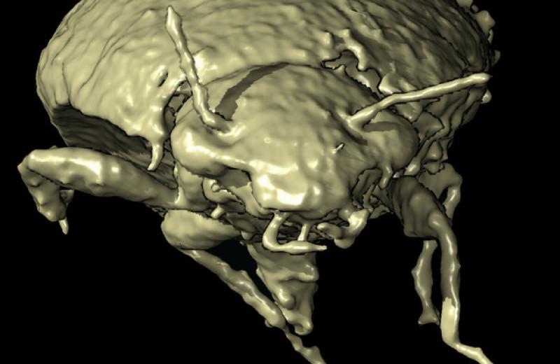 Палеонтологи обнаружили новый вид жуков в копролите триасового архозавра
