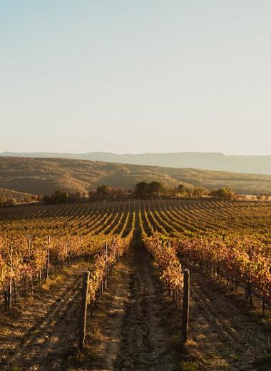 Молодая лоза: как новое поколение виноделов ломает стереотипы о производстве вина в России