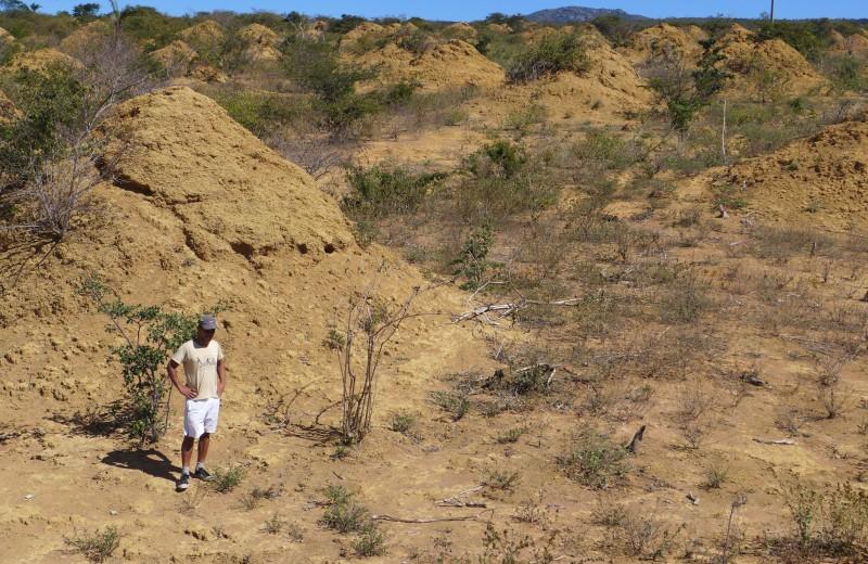 В Бразилии нашли крупнейшую на планете группу термитников. Ее видно из космоса!