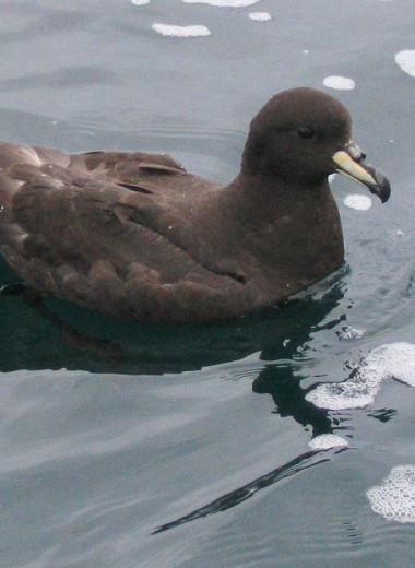 В новозеландском поселке отказались от ночного освещения улиц, чтобы спасти редких птиц