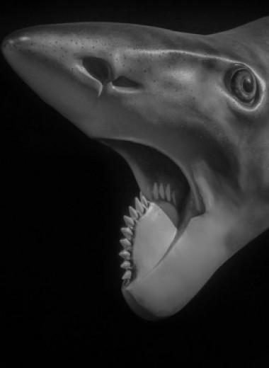 Геликоприон: рыба с циркулярной пилой во рту
