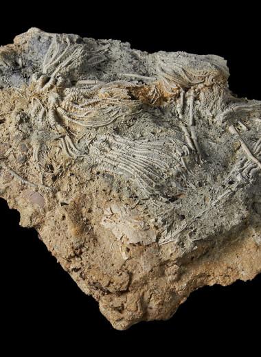 Непрофессиональные палеонтологи совершили потрясающее открытие