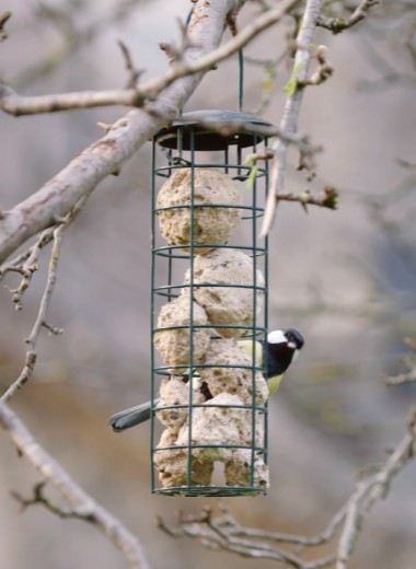 Умный бинокль для бёрдвотчеров сам распознаёт птиц