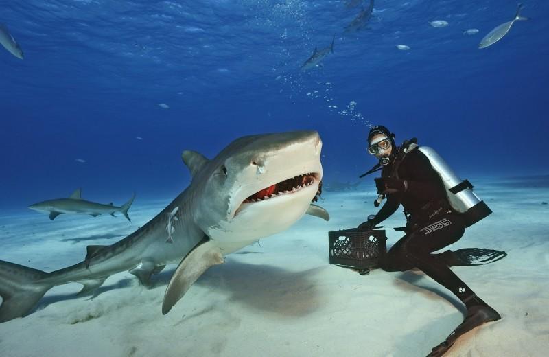 10 фактов: как выжить при нападении акулы