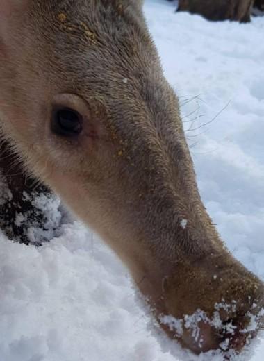 Даже африканский трубкозуб любит снег: видео
