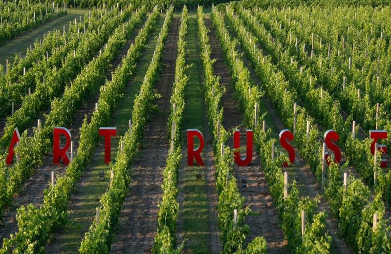 Приятная повинность: как российские миллиардеры становятся виноделами во Франции