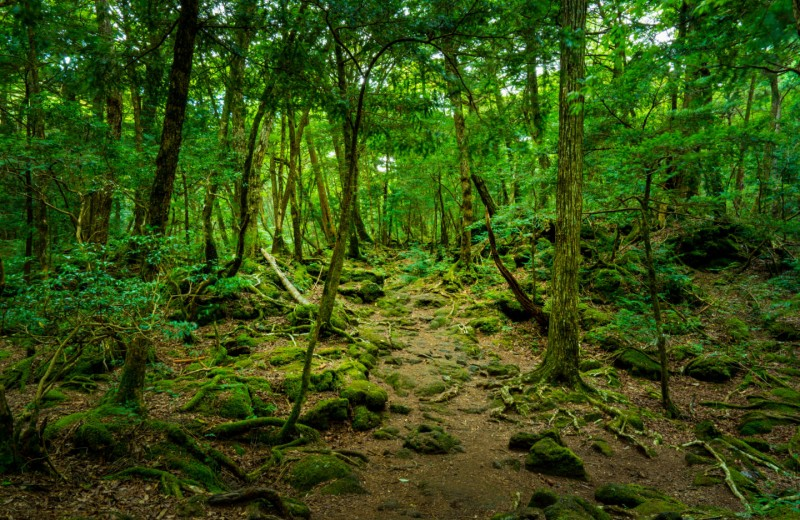 Там на неведомых дорожках: 6 лесов, где обитают призраки