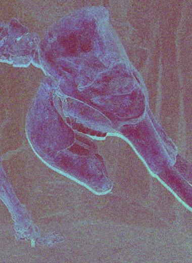 Ранние гоминины и сапиенсы не повлияли на вымирание мегафауны островов в плейстоцене