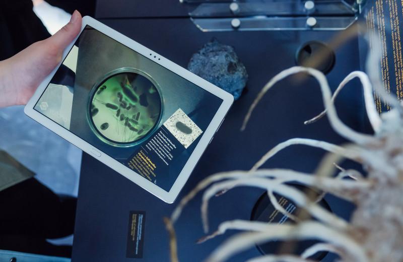Бактерии питаются энергией и помогают добывать золото