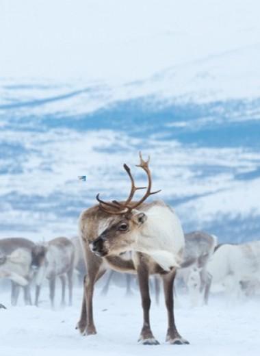25 лет дикой природы России. Кого мы сохранили и потеряли за последнюю четверть века