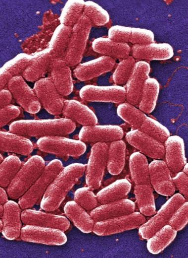 Большое количество энтеробактерий в кишечнике связали с повышенным риском смерти