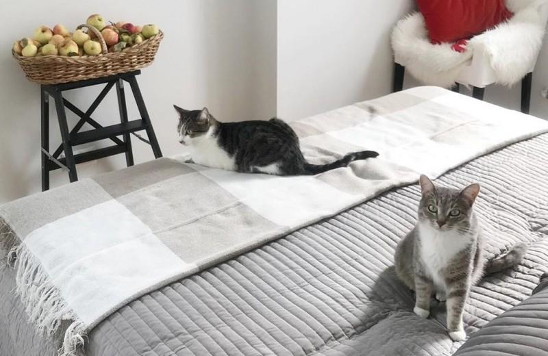 Пушистый друг бизнеса: как коты помогают предпринимателям зарабатывать больше