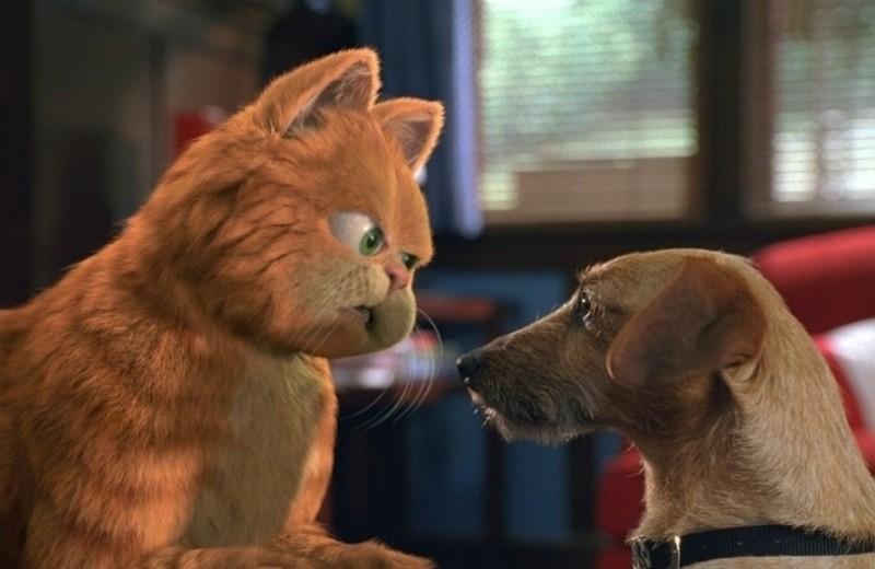 Хочешь завести кошку и собаку одновременно? 7 правил, которые стоит запомнить