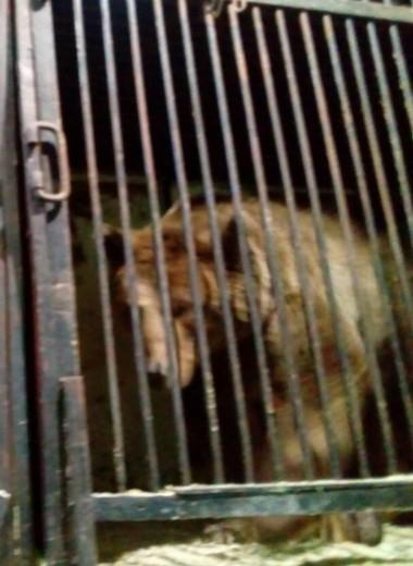 Самарские волонтеры спасли брошенных на автостоянке медведей