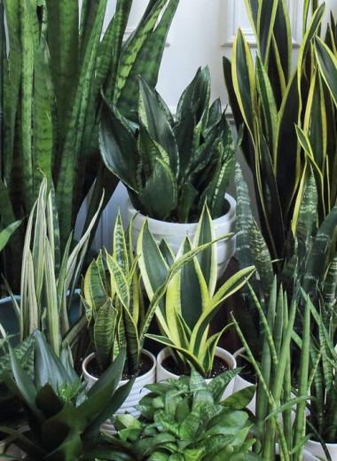 Озеленяемся: лучшие растения для дома и офиса, за которыми легко ухаживать