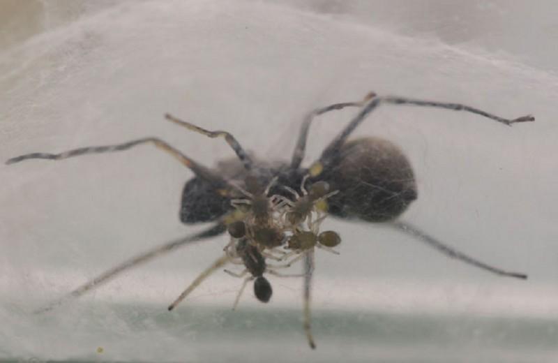 Млекопитающие пауки найдены в Китае