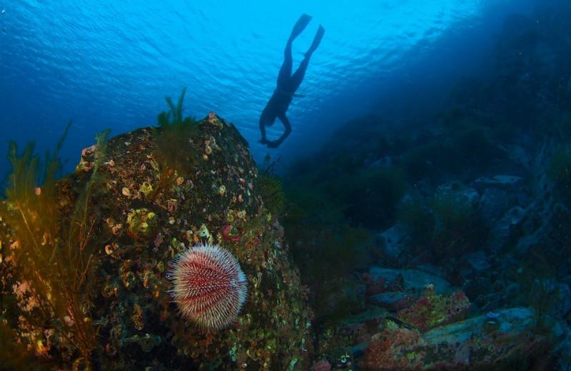 Фридайвинг в Северном Ледовитом океане: экстремальная проверка на прочность