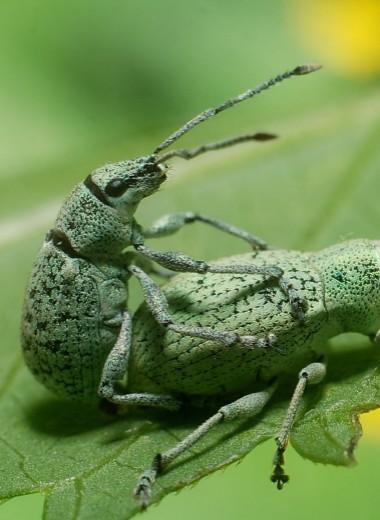 Половая жизнь насекомых: правда и вымысел