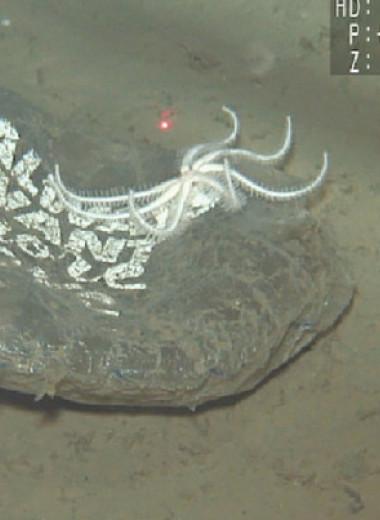 Течение Куросио унесло выброшенный воздушный шарик на рекордную глубину в 5800 метров
