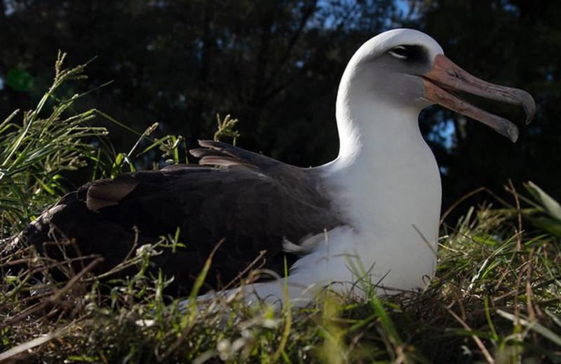 Мама-долгожительница: старейшая дикая птица в мире снесла яйцо в 69 лет
