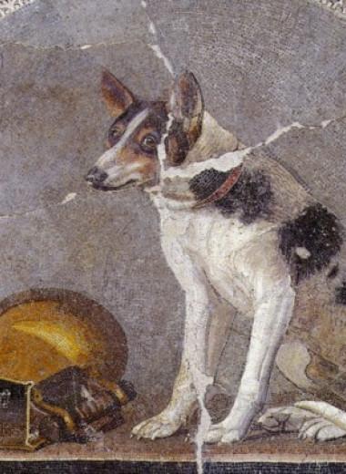 Челюсть койота оказалась древнейшими останками собаки в Америке