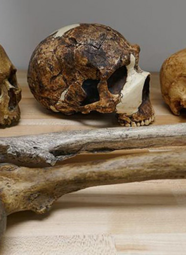 Климат менял размеры тела человека на протяжении миллиона лет