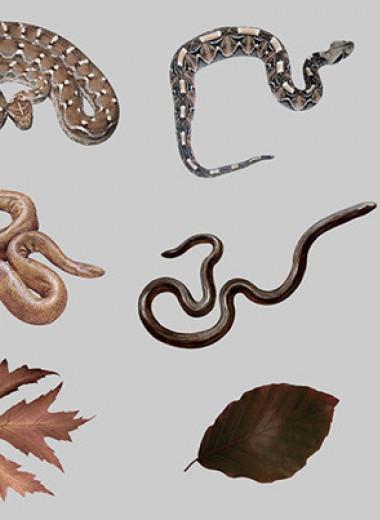 Мозг отличил гадюк от неядовитых змей