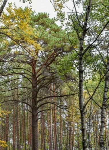В Амурской области появился новый природный парк «Зейский»