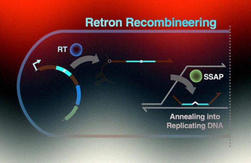 Ретроны помогли создать новый инструмент для редактирования генома