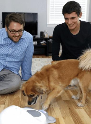 Стартап CleverPet продал тысячи панелей для «разговоров» с животными: чем он занимается и как работают его устройства
