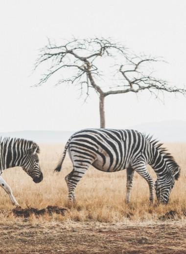 В Африку гулять: королевство Эсватини