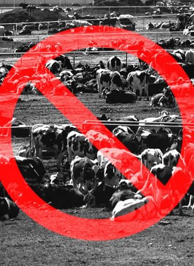 Что такое альтер мясо и перейдем ли мы на искусственную еду?