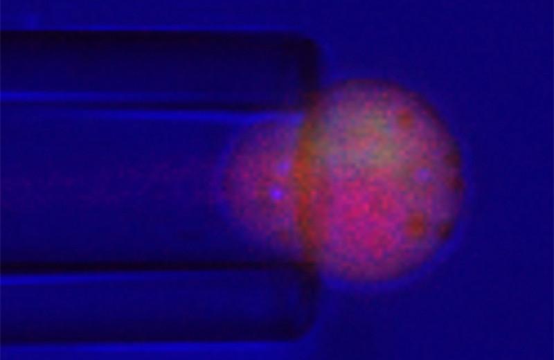 Биоинженерный суставной хрящ синтезировал для себя лекарство в ответ на нагрузку