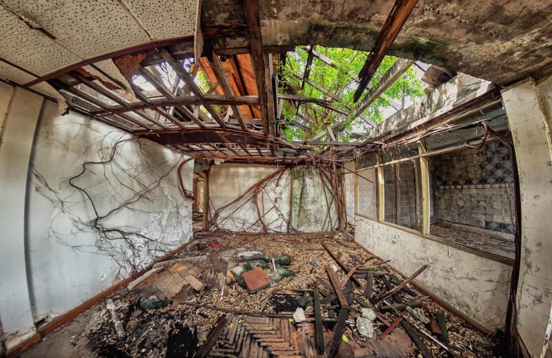 Зри в корень: занимательные факты о «подземной» жизни растений