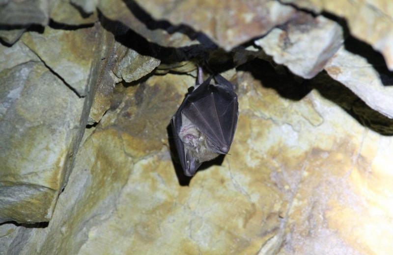 Зачем австралийские ученые подогрели гуано летучих мышей