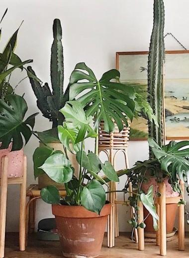 Ваш домашний сад: 5 простых шагов, чтобы начать озеленение интерьера