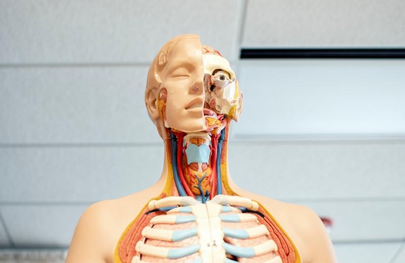 #пронауку: 8 пугающих опытов над собственным телом