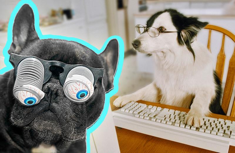 Ученые назвали самые умные и самые глупые породы собак